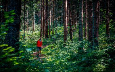 Forest Bathing: Alpe Cimbra il segreto del benessere