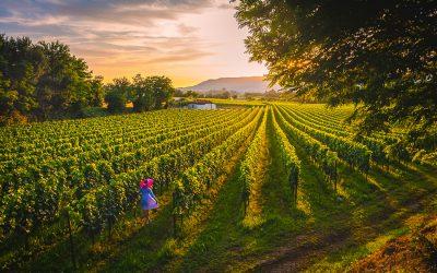 Un territorio di Vino